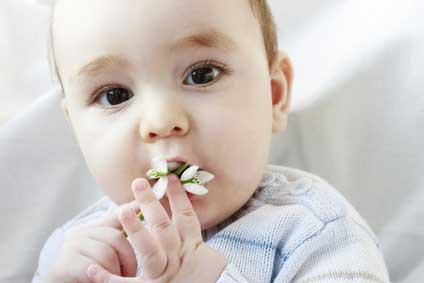 Plante d'intérieur et intoxication: savoir réagir et protéger l'enfant